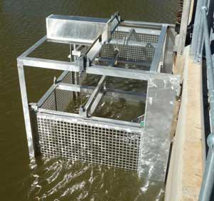 The carp cage trap is now in place to help eradicate carp from the Lachlan River system.