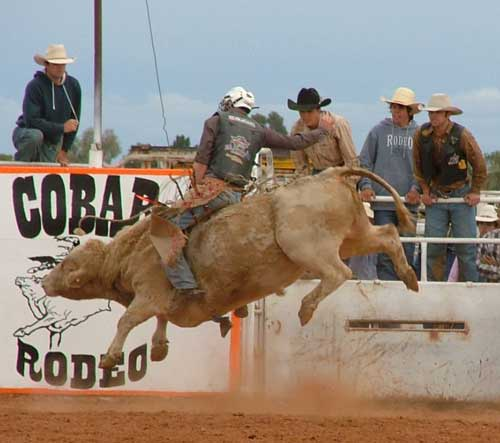 Uralla cowboy Duncan Elks shows how it's done on Nackadoo Rodeo Company's 'Deadly'. OM