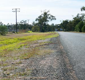 Kittens were dumped carelessly on the edge of the Golf Links Road, Condobolin.