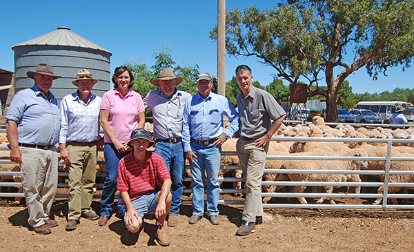 The twentieth Annual Maiden Merino Ewe Competition had perfect conditions with a 27C day as a crowd of sixty spectators travelled around the nine entrants' properties on two buses and a variety of vehicles.
